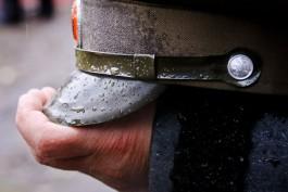 В Калининградской области казаки будут бороться с незаконными вырубками и охотой