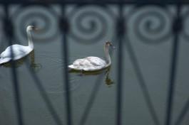 Владельцы особняков в Большом Исаково незаконно перекрыли доступ к Чистому пруду