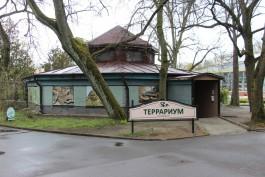 В калининградском зоопарке после ремонта открыли террариум
