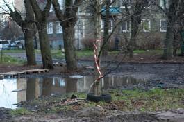 Дятлова попросила коммунальщиков очистить провода и деревья во дворах Калининграда от мусора