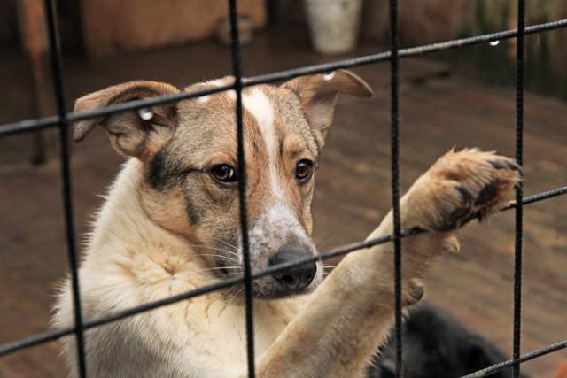 ВКалининграде навремя проведения ЧМ-2018 готовят центры передержки собак