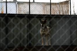 Жителя Калининграда будут судить за расстрел соседских собак