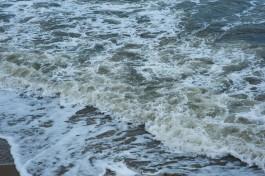Эксперт: На побережье Калининградской области раньше времени появились ушастые медузы
