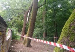 Калининградский зоопарк получил разрешение на вырубку 17 деревьев