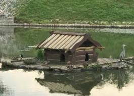 «Заходи к нам жить»: на озере Поплавок в домик к уткам подселилась серая цапля