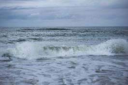 В Янтарном сняли на видео купание косули в море