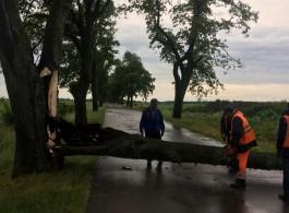 Во время ночного шторма в Калининградской области ветер повалил 43 дерева