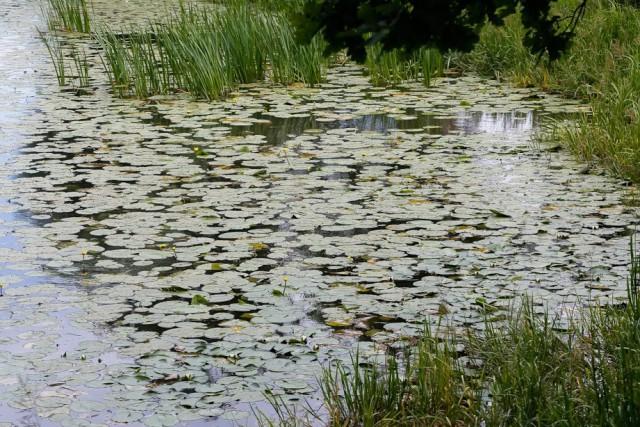 Расчистку рек Инструч и Прохладной планируют закончить значительно раньше срока