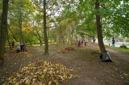 На содержание зелёных зон Калининграда выделяют 178 млн рублей