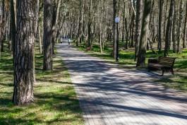 «Парк, сквер и видовая точка»: на благоустройство зон отдыха в Отрадном выделили почти 100 млн рублей