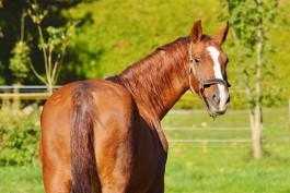 В Калининградской области появятся казачьи конные патрули