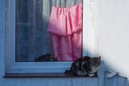УМВД: Иностранец купил в интернете вид на жительство и поселился в Гурьевске