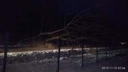 «Настоящий коллапс»: из-за упавшего дерева на выезде из Чкаловска образовалась пробка