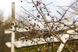 В выходные в Калининградской области ожидается потепление до +7°С
