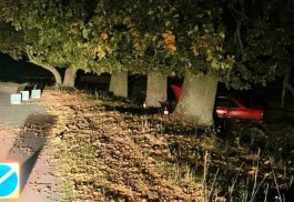 В Багратионовском округе «Ауди» врезалась в дерево: пострадали мужчина и подросток