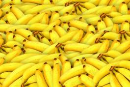 В Калининградскую область не пустили тонну бананов из Коста-Рики
