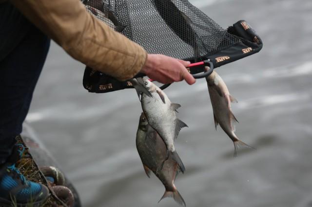 соревнования по рыбной ловле 2017 в калининграде