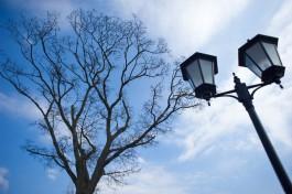 В городском парке Ладушкина вандал разбил 18 фонарей