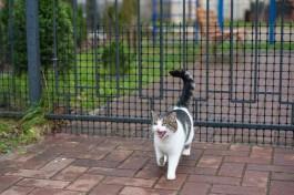 Госдума ужесточила наказание за жестокое обращение с животными