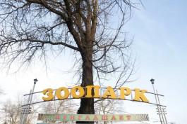 Калининградский зоопарк изменит время работы