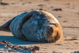Польских рыбаков подозревают в массовом убийстве тюленей на побережье Балтийского моря
