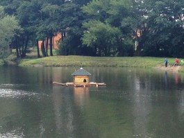 В Лесном ручье на окраине Калининграда установили домик для уток