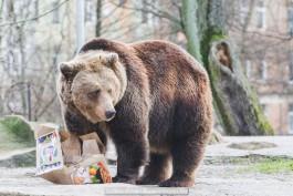 В Калининграде выгнали из зоопарка мужчину, пытавшегося накормить медведя сгущёнкой