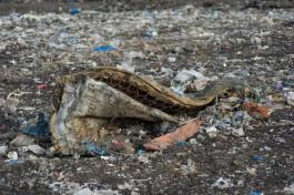 На проспекте Победы в Калининграде обнаружили загрязнение мышьяком, цинком и кобальтом