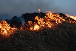 За сутки в Калининградской области зафиксировали семь палов травы