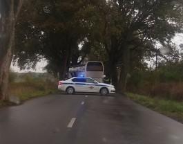 На Люблинском шоссе автобус врезался в дерево: пострадал водитель