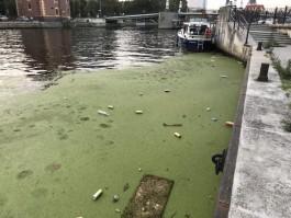 Почему никто не убирает мусор возле Рыбной деревни?