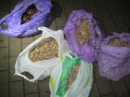 Пограничники задержали в Чернышевском крупную партию контрабандного янтаря