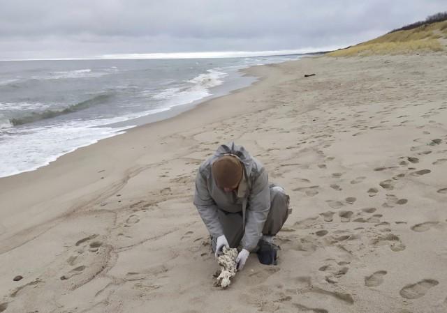 На Куршской косе собрали 60 кг парафина на побережье