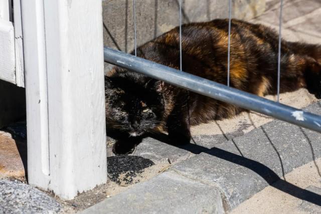 Жительница Зеленоградска требует через суд закрыть ветеринарную клинику в многоквартирном доме