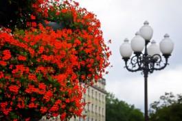 Региональные власти планируют передавать городские парки в концессию