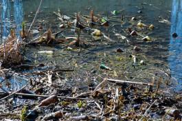 Алиханов поручил проработать проект очистки Ялтинского пруда и Гагаринского ручья