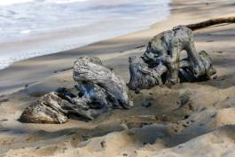 «Буны и намыв песка»: в Филинской бухте планируют укрепить берег и расширить пляж