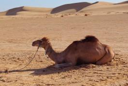 Житель Светлого засудил туроператора за несвовременный возврат денег за путёвку в Египет