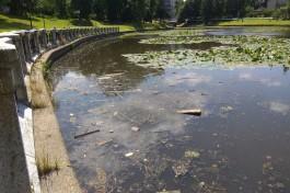 Очевидцы сообщают о массовой гибели уток на Верхнем озере в Калининграде
