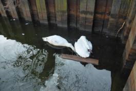Росприроднадзор зафиксировал в Калининградской области два нефтеразлива