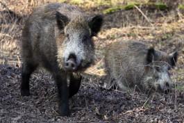 В нацпарке «Куршская коса» просят посетителей не кормить диких животных