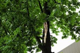 Штормовой ветер повалил 36 деревьев на трассы в Калининградской области