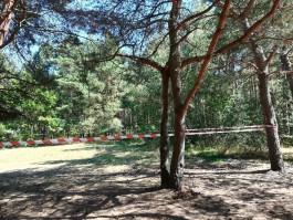 После взрыва снаряда в Балтийске вводят запрет на посещение лесов