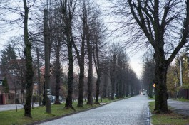 В Калининграде проведут обрезку 160 деревьев