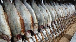 Экспорт калининградской трески в страны ЕС сократился на треть