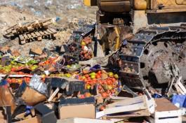 «Бульдозером по помидорам»: в Калининградской области уничтожили санкционные овощи и фрукты