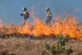 К тушению горящей травы в Калининградской области за сутки привлекли 115 пожарных