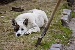 Прокуратура: Жительница области поставила на поток убийства соседских собак