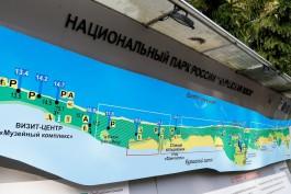 Проект велодорожки на Куршской косе получил положительное заключение госэкспертизы