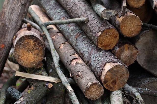 За преступную вырубку леса арендатор выплатит 20 млн. руб. вКалининградской области